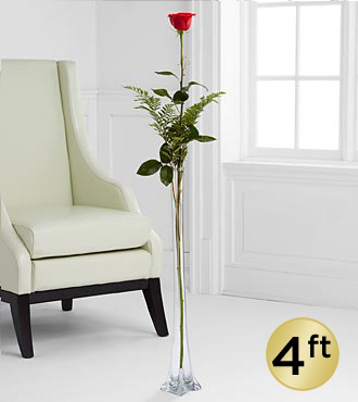 The Ultimate Rose - Single Stem 4-Foot Rose - VASE INCLUDED