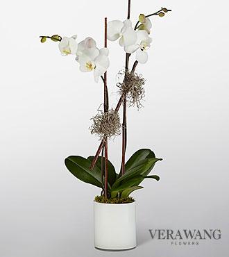 Vera Wang Dazzling Diamond Orchid Duo