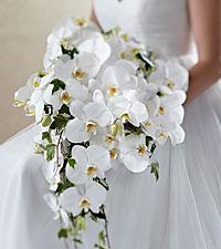 Le bouquet Classic White™ de FTD®