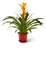 Care Tips For Specific Plants