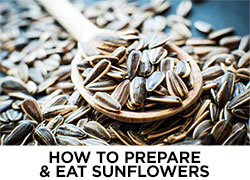 How to Prepare and Eat Sunflowers