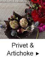 Privet & Artichoke