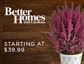 Better Homes & Garden Plants