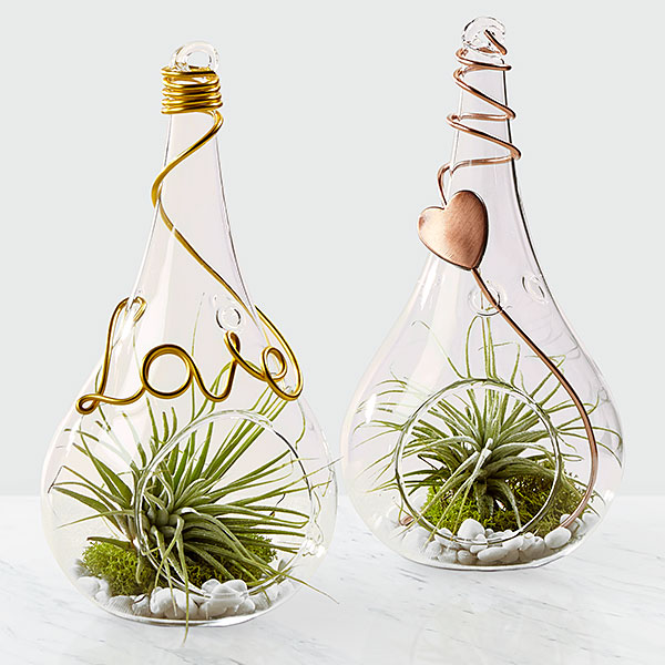 Love is in the Air Valentines Day Terrariums